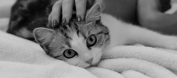 diagnostyka chorób u kota i psa