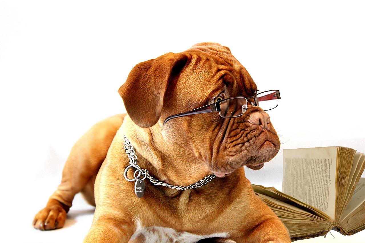 choroby oczu u psa
